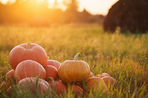 fall_pumpkins.jpg